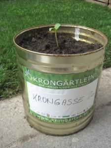 Pflanze / Säe etwas in Dein kleines Krongärtlein! Schreibe Deinen Namen / Deine Adresse / Deine Wünsche auf dein Krongärtlein